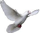 Núcleo Espírita Assistencial Paz e Amor
